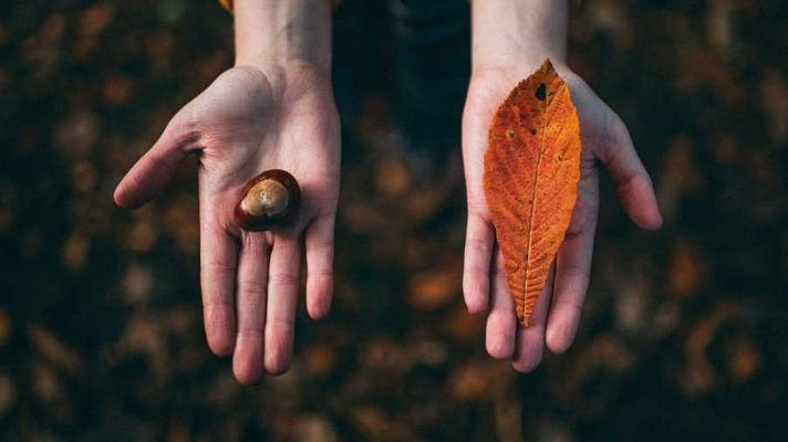 To åpne hender som holdes frem, ett med kastanje og ett med oransje blad
