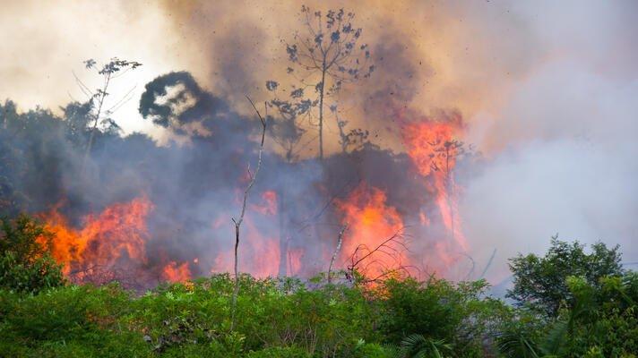 Skogbrann i Amazonas.